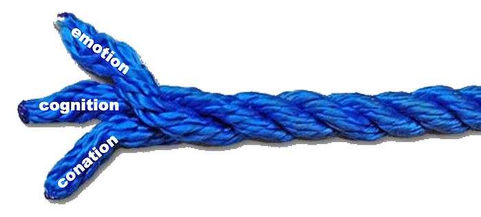 cognitionconationemotion rope