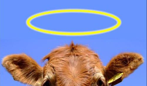 Emergence: 1 of 6 Sacred Cows of Systems Thinking
